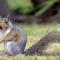 Jimmy, l'amico scoiattolo - Jimmy, my squirrel frind