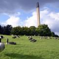 Oche canadesi nel parco della Nottingham University - Nottingham University park with canadia geese